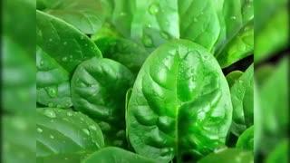 10 سوپر ماده غذایی برای نابود کردن سلول های سرطانی(3)