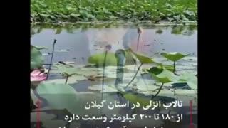 اجرای پروژه ی خیانت بایوجمی در انزلی توسط عوامل محیط زیستی دولت جنتلمن