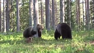 صحنه هیجان انگیز دعوای دو خرس
