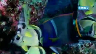 حیات وحش اقیانوس بزرگ با دوبله فارسی - قسمت 14