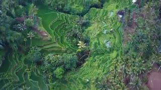 بهترین جاذبه های گردشگری در بالی | منطقه اوبود | تورنت