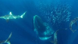 کوسه، دلفین، نهنگ، و پنگوئن سر یک سفره