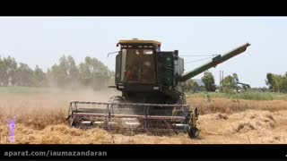 برداشت محصول کشاورزی گندم از زمین های زراعی دانشگاه آزاد اسلامی واحد جویبار