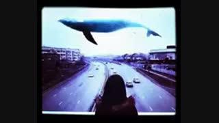 آهنگ نهنگ آبی + تکست