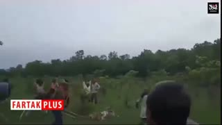 کشتن ببر بیچاره با چوب و چماق توسط روستائیان وحشی!