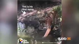 اولین عکسالعمل حیوانات آزاد شده از یک سیرک