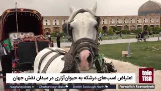 اعتراض اسبهای درشکه به حیوانآزاری در میدان نقش جهان