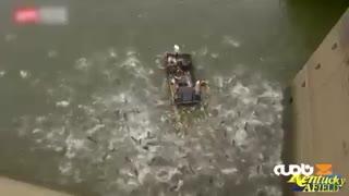 صید بیرحمانه ماهی در کنتاکی امریکا