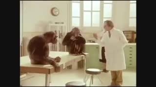 وقتی میمون به انسان درس انسانیت می دهد