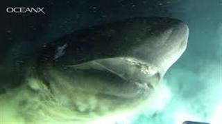 فیلمبرداری از کوسه ماقبل تاریخی در اعماق اقیانوس