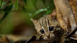 کوچکترین گربه سان دنیا