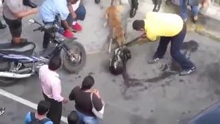دو سگ ولگرد و یک نبرد واقعی