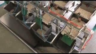 خط تولید حبوبات