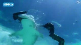 قاتلان اعماق دریا (کوسه ها)