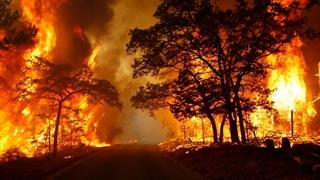 ۱۱ هزار و ۲۵۴ هکتار از جنگلها در آتش سوخت