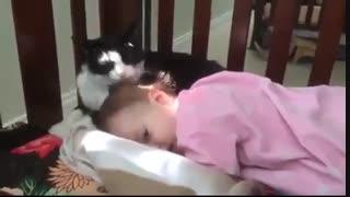 چند دقیقه با حیوانات 2