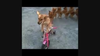 چند دقیقه با حیوانات 4