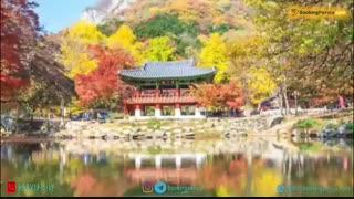 کره جنوبی، کشور جنگل های زیبا و افسانه های ماندگار- بوکینگ پرشیا bookingpersia
