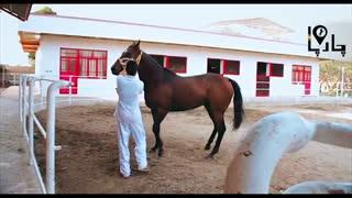 اسب های برتر تروبرد از برترین سیلمی ها