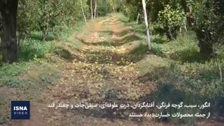 خسارت تگرگ تابستانی در ۴۷ روستای ارومیه