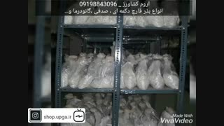 فروش بذر قارچ خوراکی و مواد اولیه تولید قارچ به همراه آموزش
