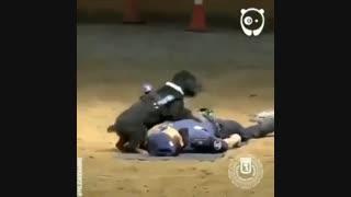 سگ امداد گر
