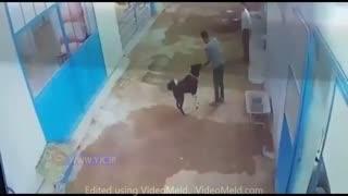 فیلم لحظه دلهره آور حمله سگ به یک شهروند اصفهانی
