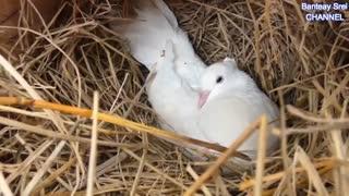 نجات پرنده ها از چنگال مار