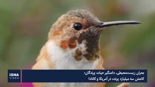 بحران زیستمحیطی، بلای جان میلیاردها پرنده