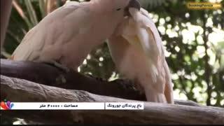 باغ پرندگان جورونگ، زیباترین پرندگان جهان در سنگاپور - بوکینگ پرشیا