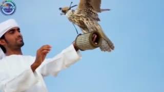 چیزهایی عجیب که فقط در امارات دیده می شود!
