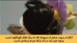 فواید عسل در قرآن