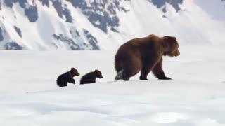 مستند خرس ها - Bears 2014 با دوبله فارسی