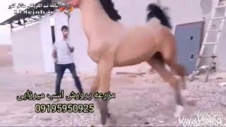مزرعه پرورش اسب میرزایی در شیراز