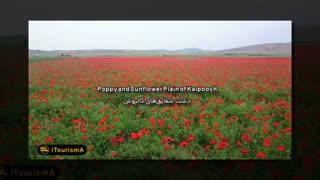 طبیعت زیبا و سرسبز  ایران