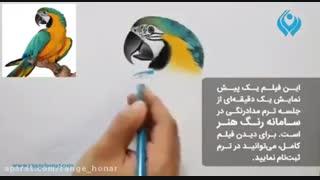 آموزش نقاشی از پرنده با مدادرنگی