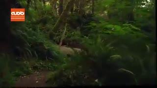 زیبایی های پارک ملی رد وود آمریکا را ببینید