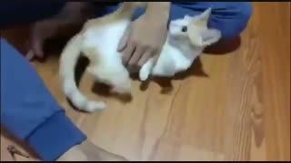 آموزش گرفتن ناخن گربه در خانه
