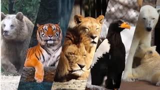 سریعترین موجوداتی که در این سیاره زندگی می کنند