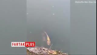 ماهی با چهره انسان در چین!