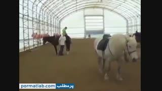اسب وحشی و لگد محکم به پسره