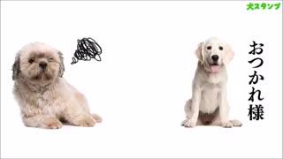 Dog Stickers Free