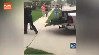 تمساح دربند با ضربه ای مامور محیط زیست را بیهوش کرد!