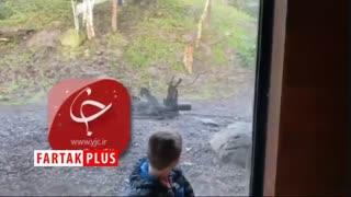 لحظه حمله ببر به پسر خردسال در باغ وحش