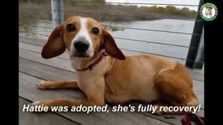 جراحی غده 7 کیلویی سگ بیچاره