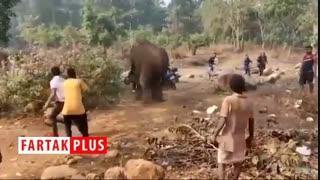 پیک نیکی که توسط یک فیل به هم خورد