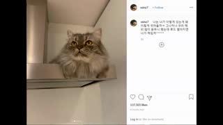 آپدیت های امروز نفس بی نام(پارک شین هه) FULL HD کمیاب ویدیو کامل(با عنوان یه گربه رو کمد) مثل این پیام امروزم رو گرفته