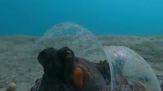 اختاپوس مافیا زیر دریا
