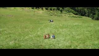 تریلر شماره 2 فیلم Peter Rabbit 2: The Runaway