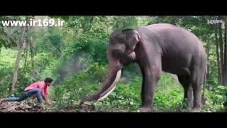 تیزر فیلم Junglee 2019